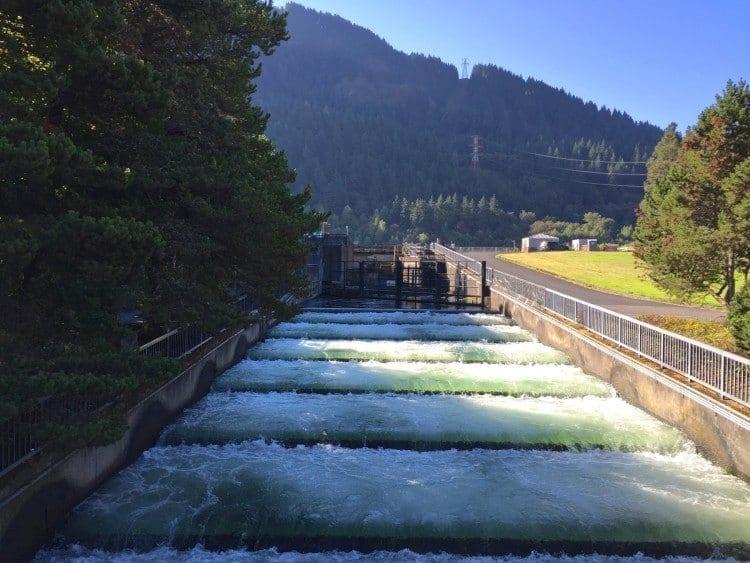 Fish Ladder Bonneville Dam