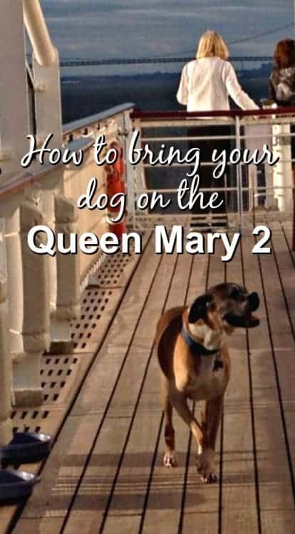 Queen Mary 2 how to travel with your dog