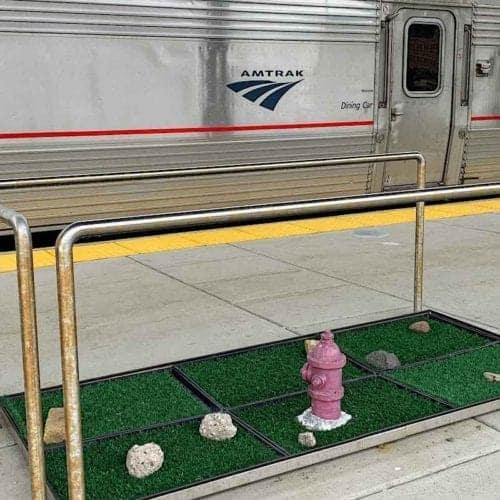 Amtrak station dog potty break area