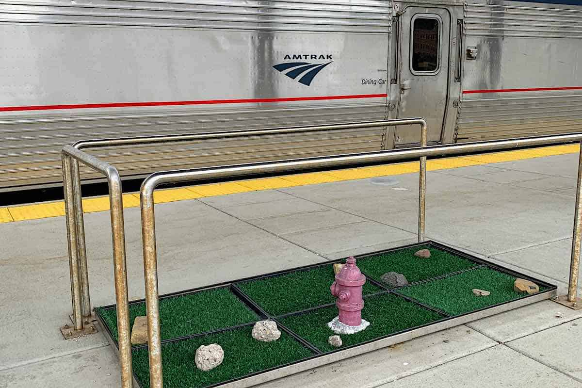 Amtrak pet policy allows small pets on the train with you.
